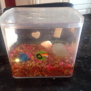 Mini Aquarium (can be used for mini frogs or fish)