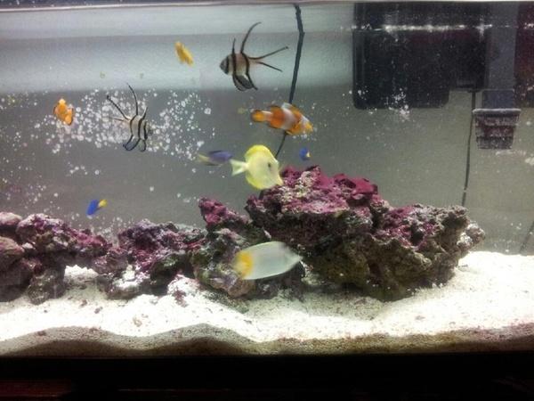Aquarium Supplies Redmond Wa Bird Cage And Accessories